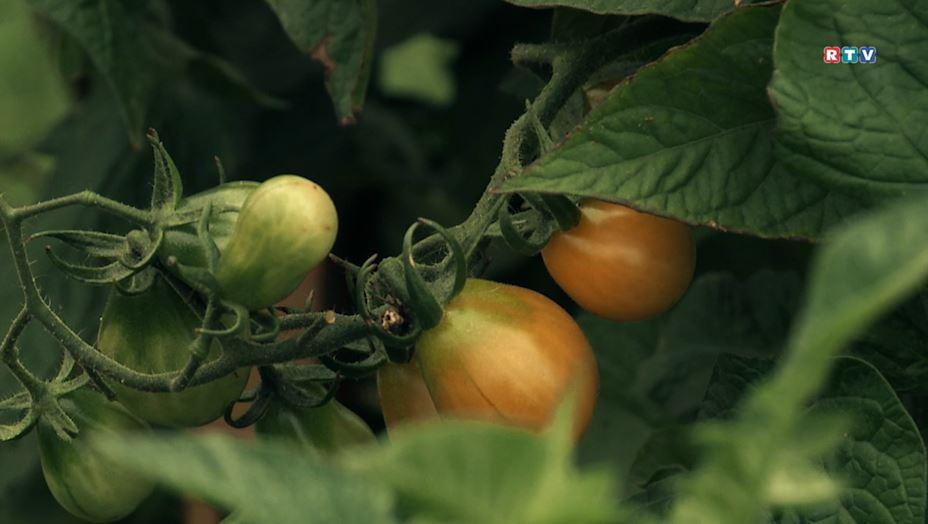 Gartenprojekt - Selber Ernten